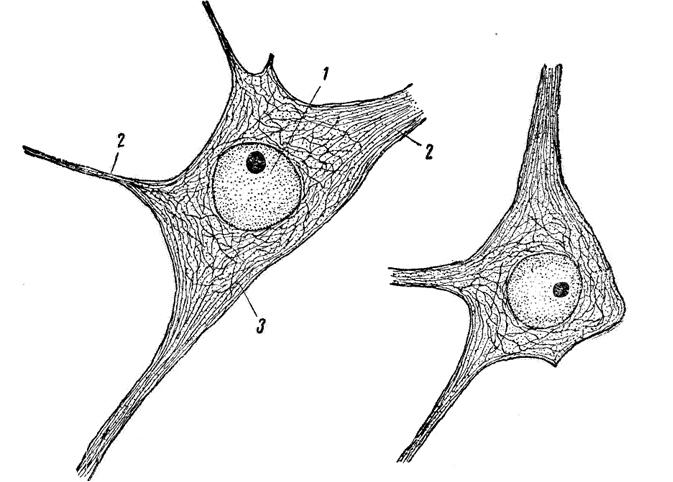 Клетка Нервная